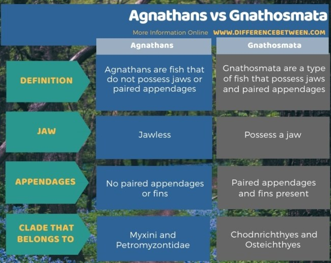 Difference Between Agnathans and Gnathosmata in Tabular Form