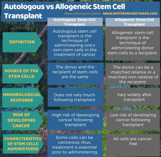 Difference Between Autologous and Allogeneic Stem Cell Transplant in Tabular Form