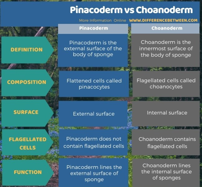Difference Between Pinacoderm and Choanoderm in Tabular Form