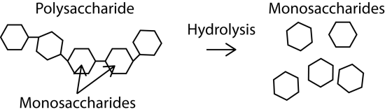 Difference Between Solvolysis and Aminolysis