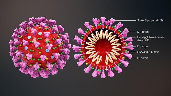 Difference Between Coronavirus and Influenza