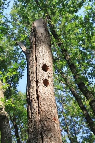 Key Difference - Macro vs Micro Habitat