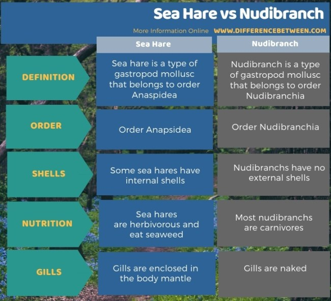 Difference Between Sea Hare and Nudibranch in Tabular Form
