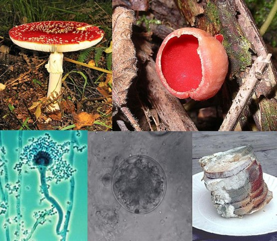 Key Difference - Myxomycota vs Eumycota