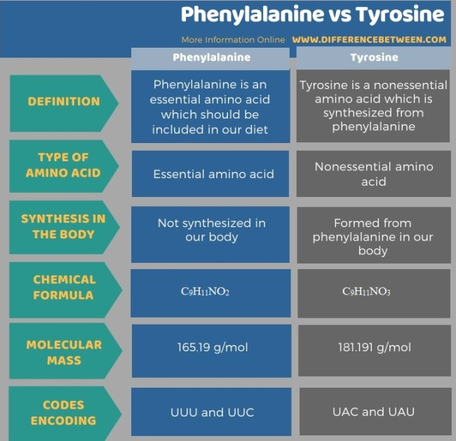 Difference Between Phenylalanine and Tyrosine in Tabular Form
