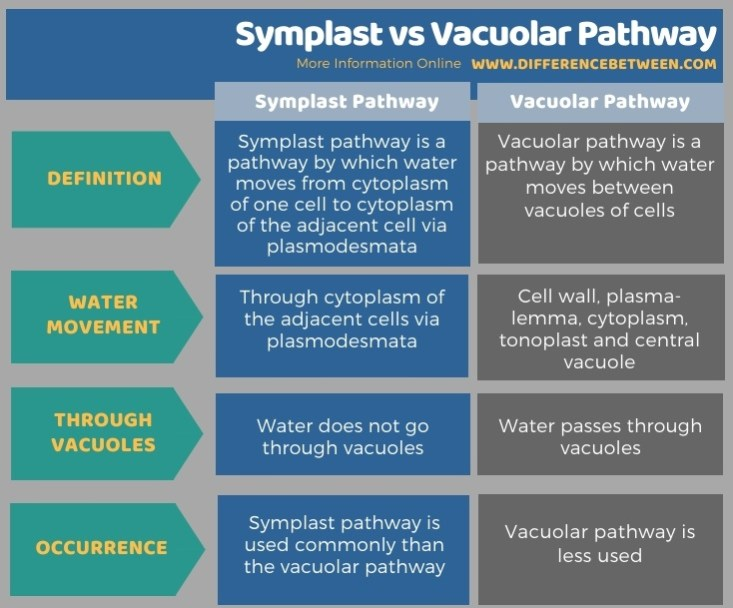 Difference Between Symplast and Vacuolar Pathway in Tabular Form