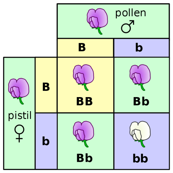 Key Difference - Blending vs Particulate Inheritance