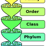 Difference Between Classification and Binomial Nomenclature
