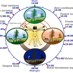 Difference Between Biological Clock and Circadian Rhythm
