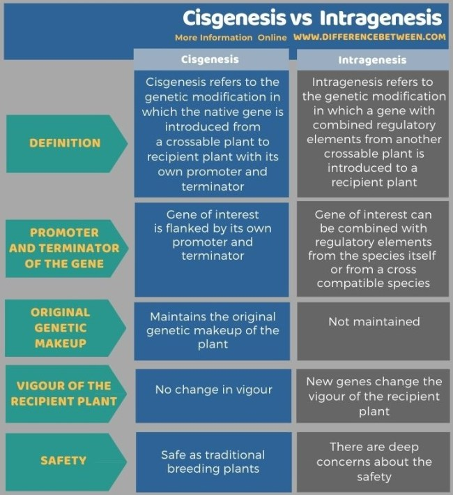 Difference Between Cisgenesis and Intragenesis in Tabular Form