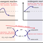 Difference Between Coupled and Uncoupled Reaction