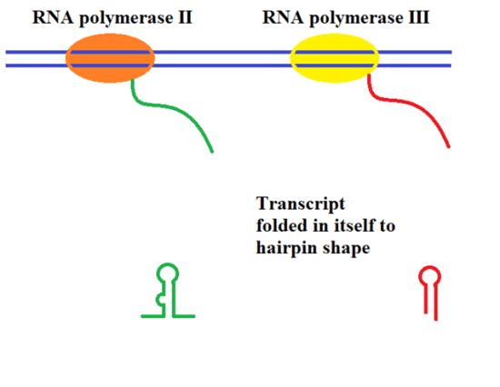 Difference - Transcriptional vs Posttranscriptional Gene Silencing