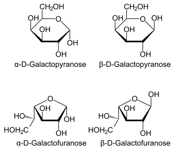 Key Difference - Glucose Galactose vs Mannose