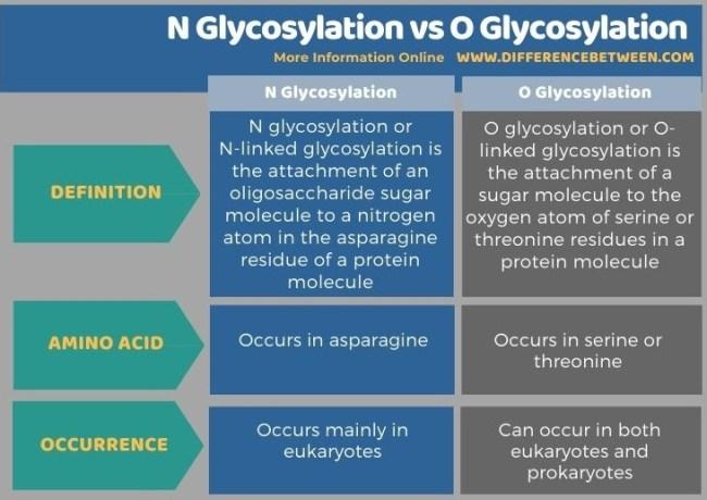 Difference Between N Glycosylation and O Glycosylation in Tabular Form