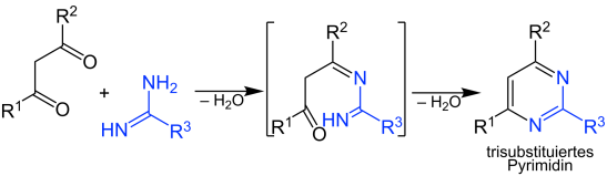 Key Difference - Purine vs Pyrimidine Synthesis