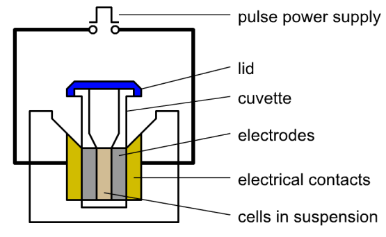 Difference Between Electroporation and Microinjection