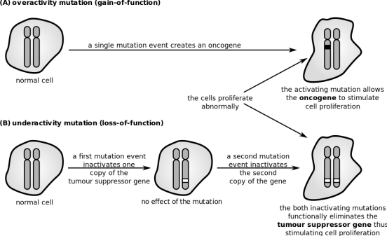 Difference Between Intragenic and Extragenic Suppressor Mutation