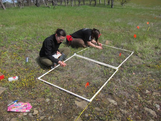 Difference Between Belt and Line Transect