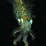 Difference Between Cephalopods and Gastropods