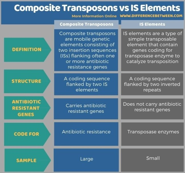Difference Between Composite Transposons and IS Elements in Tabular Form