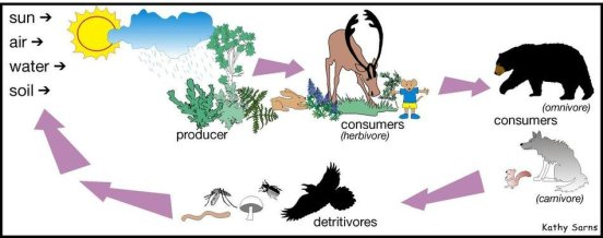 Key Difference - Detrital vs Grazing Food Chain