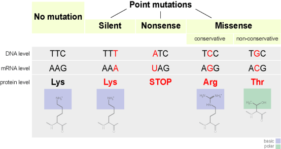 Key Difference - Substitution vs Insertion vs Deletion Mutations