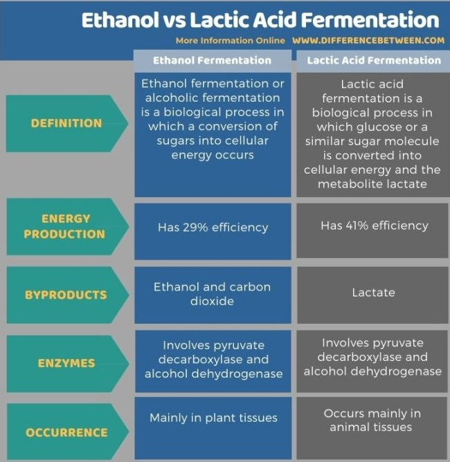 Difference Between Ethanol Fermentation and Lactic Acid Fermentation in Tabular Form