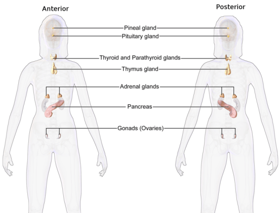 Endocrinology and Gastroenterology - Difference