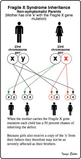 Fragile X and Autism - Comparison
