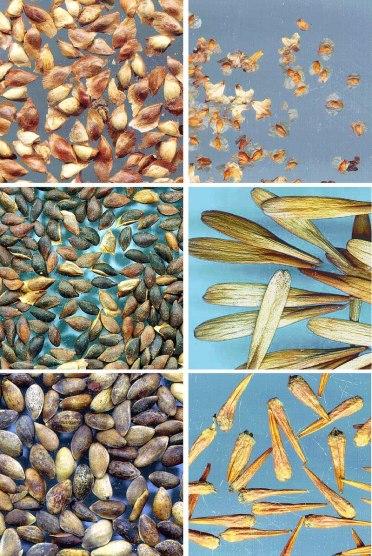 Orthodox vs Recalcitrant Seeds