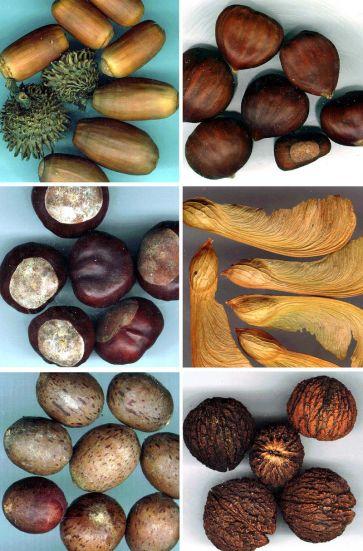 Compare - Orthodox vs Recalcitrant Seeds
