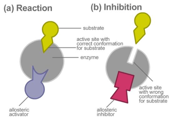 Compare Non-Competitive vs Allosteric Inhibition