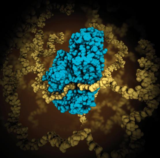Anabolic vs Catabolic Enzymes in Tabular Form