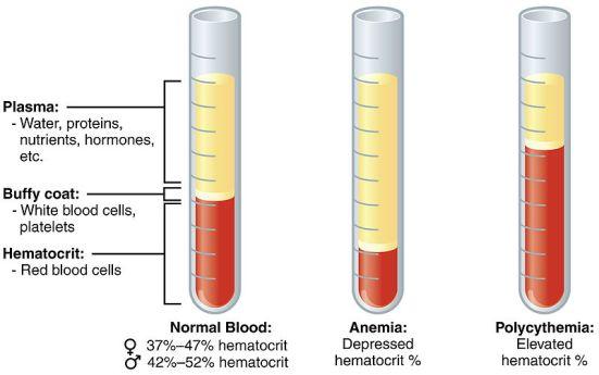Primary Polycythemia and Secondary Polycythemia - Side by Side Comparison