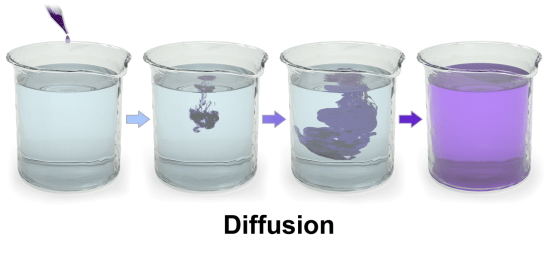 Convection and Diffusion - Side by Side Comparison