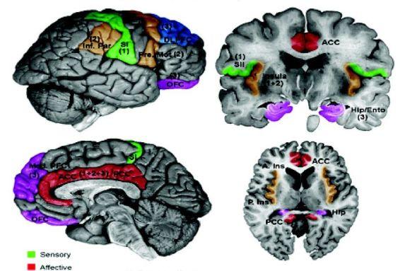 Primary vs Secondary Somatosensory Cortex in Tabular Form