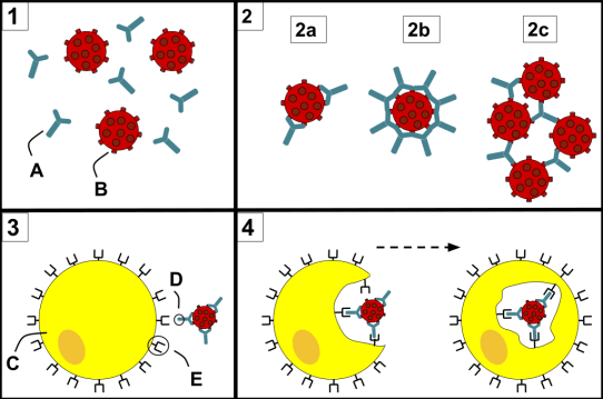 Cytokines and Opsonins - Side by Side Comparison