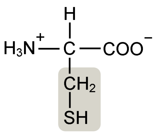Cysteine and Selenocysteine - Side by Side Comparison