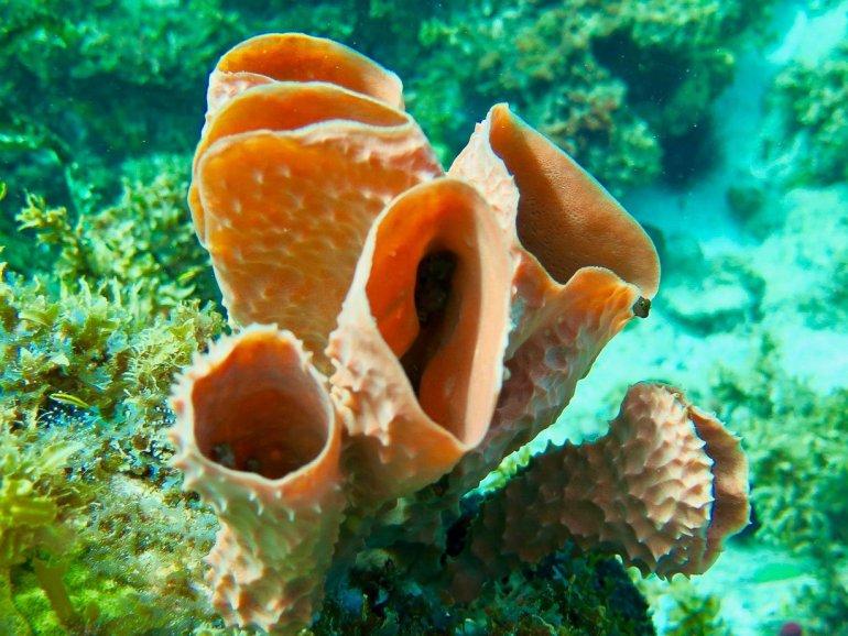 Des belles éponges tonneau dans lesquelles se cache un poisson