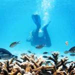 Un plongeur s'éloigne dans les eaux claires de Bonaire