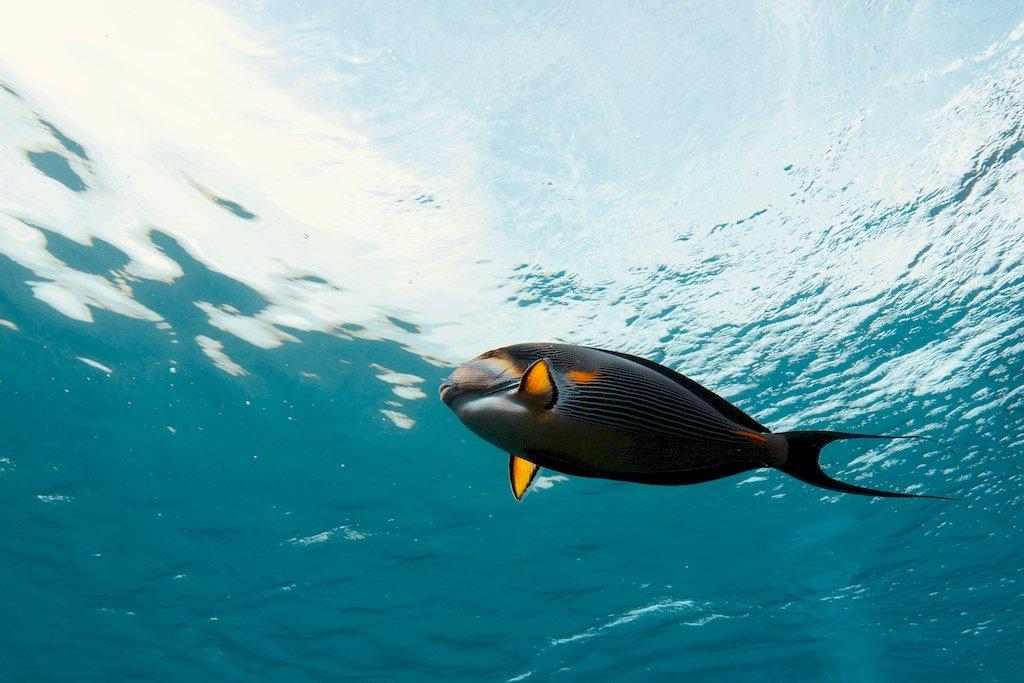 Un poisson coloré