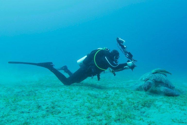 Un plongeur photographiant une tortue