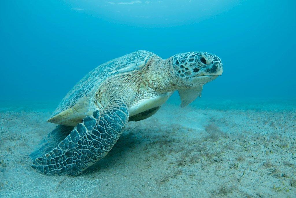 Une tortue dans l'eau