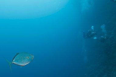 Un poisson nage vers les plongeurs