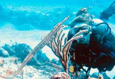 Plongée sous-marine : qui sont ces femmes ?