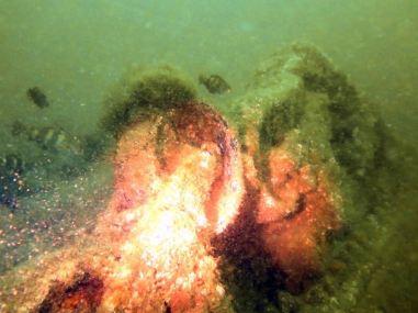 Plonger en Normandie pour découvrir les épaves