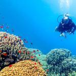 Un plongeur observe les récifs coralliens en Egypte