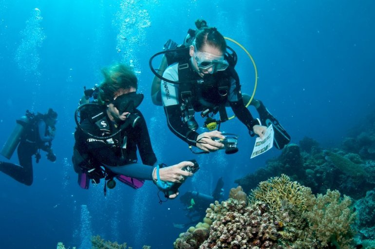 Des plongeurs et plongeuses occupés à observer la vie sous-marine