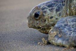 Un gGros plan sur la tête de la tortue marine