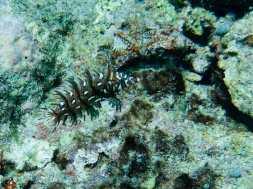 Un drôle de poisson sous l'eau à Mayotte